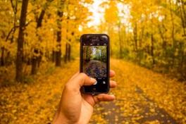 phone-leaves