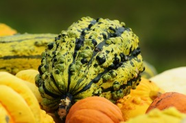 pumpkins-1642231_1920